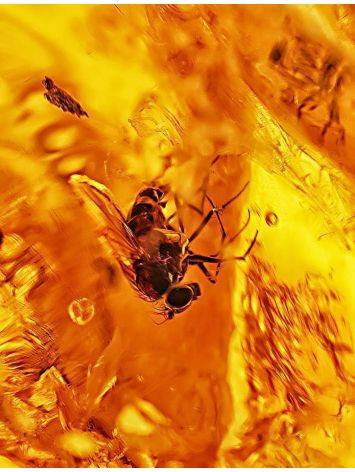 Glossy Amber Stone With Fly Inclusion, image , picture 2