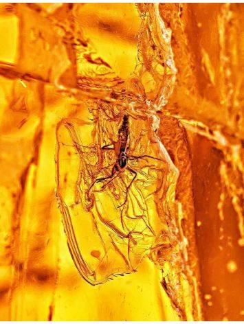Amber Stone With Insect Inclusion, image , picture 7