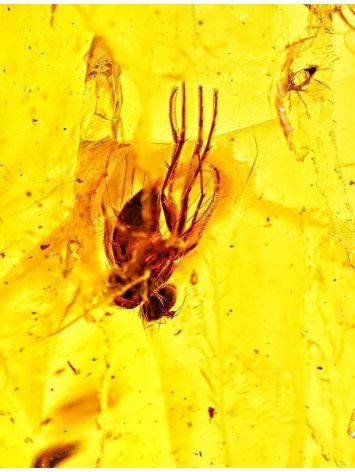 Natural Amber Stone With Insect Inclusion, image , picture 2