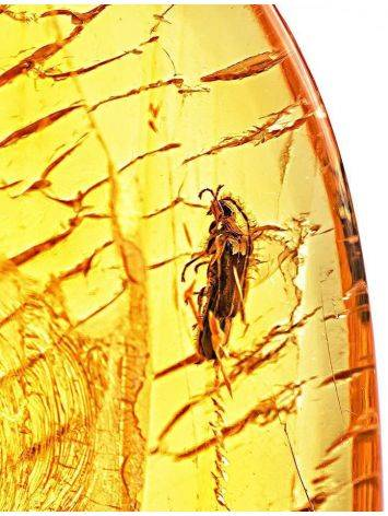 Textured Amber Stone With Fly Inclusion, image , picture 4