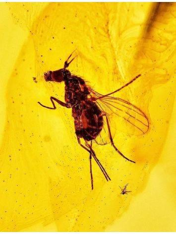 Lemon Amber Pendant With Midge Inclusion, image , picture 3